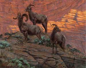 Canyon Corridors Big Horn Sheep