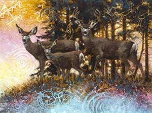 Forest spirits - mule deer